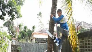 alat praktis panjat pohon